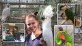 """""""Chechtavý Jack"""" v botanické! Největší ledňáček na světě se hurónsky směje a krade maso z grilů"""