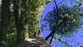 Stromové aleji ve Frýdku-Místku jmelí štěstí nepřineslo: Zahubilo lípy a javory, musí se vykácet