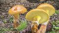 Jaké houby rostou v létě: Nečekejte na podzim. Co sbírat od června do srpna?