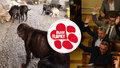 Konec množíren po tlaku Blesk tlapek? Poslanci přitvrdili podmínky pro chov psů