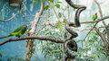 Jak se daří papouškům vnovém pavilonu Zoo Praha? Jsou to vandalové i baviči!