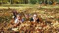 Tropům v Česku odzvonilo. S novým školním rokem nakoukne podzim, přidá se i déšť