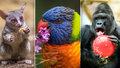 V Zoo Praha se i o Vánocích zdravě mlsá! Víme, kolik zvířata zbaští mrkve, masa nebo švábů