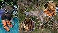 Pomoc pro ohořelé klokany a koaly: Češi posílají miliony, do kapsy sáhla i Kvitová