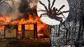 Další rána pro Austrálii. Po požárech a záplavách experti varují před smrtícími pavouky