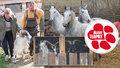 Kozy z balkonu za tři sta, koně na převýchovu. Týraná zvířata zČíčovic propadla státu