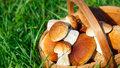 Jedlé, nejedlé a jedovaté hřiby: Rozeznáte je od sebe?