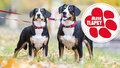 Veterináři spustili databázi ztracených psů. Centrální registr ale stále vázne