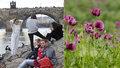 Víkend přinese až 10 °C a aprílovou oblačnost. Čerstvý pyl potrápí alergiky