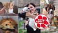 Nezbavujte se mazlíčků! Koronavirus nešíří ani nepřenášejí, apelují psí záchranáři