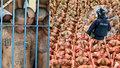 Šokující fotky z vězení v El Salvadoru: Zločinci prý ovládají zemi ochromenou koronavirem i zpoza mříží