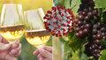 Zavřené sklepy nás tvrdě zasáhly, říká šéf českých vinařů. Čechy láká na vinařskou dovolenou