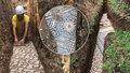 Vinice skrývala dlažbu z dob starověkého Říma. Zachovaná mozaika archeology překvapila