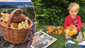 Studený máj, pro houbaře v červnu ráj: Vyrostl půlkilový pravák