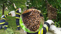 Roj včel se usadil u dětského hřiště! Hasiči ho odchytili do kbelíku od barvy