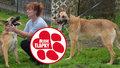 Z vyhublé Brity je krásný, sebevědomý pes. I díky čtenářům Blesk tlapek. Najde domov?