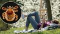 Dovolená v Česku? Klíšťata budou mít žně. V bezpečí nejste ani na horách nebo v parku