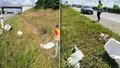 Šokující masakr labutí na dálnici: Bezohlední řidiči před mláďaty vůbec nebrzdili!