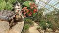 Svět sucha v plzeňské zoo: Skleník plný ohrožených rostlin i živočichů