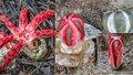 Invaze páchnoucích hub: Vypadají jako z hororu, jsou cítit po zkaženém mase!