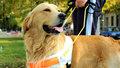 Asistenční pes. Jak probíhá výcvik nepostradatelného pomocníka?