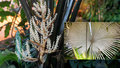 Co to tady voní? To je palma sloní! V botanické zahradě rozkvetl poklad