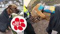 Bezdomovec zabalil pejska do mikiny a vybavil ho pamlsky, pak ho opustil! Zvíře našli na ulici