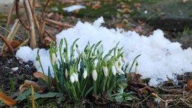 Jaro je za dveřmi: Velké mrazy už nepřijdou, březen přinese 8 °C