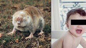 Matka vyrazila do hospody a nechala doma dcerku (3 měsíce): Sežraly ji krysy!