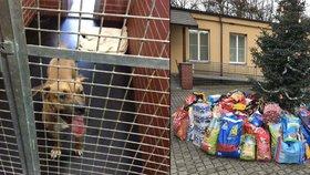 Vánoční dny otevřených dveří v trojském útulku: Vystoupí i policejní kapela
