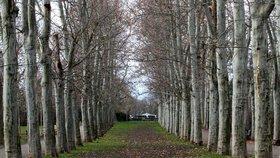 Více stromů v Praze: V Kolovratech vysází novou alej, pomoci může kdokoliv