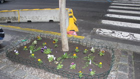 Horní Počernice budou hrát všemi barvami. Ulice osázeli květinami