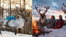 Studený život na hřbetu soba: Mongolští pastevci berou zvířata za svou rodinu