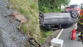 Řidička se snažila vyhnout zajíci: Škodovku obrátila na střechu a stejně ho zabila