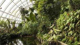 Oslava letního slunovratu v botanické: Odhalovat se budou i taje svatojánských bylin