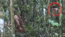 Nejopuštěnějšího muže na světě zachytily kamery: Poslední člen vyvražděného kmene žije už 22 let sám