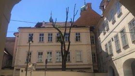 """Kauza """"zprzněného"""" stromu v Praze: Byl porušen zákon! Inspekce se případu dál věnuje"""