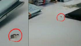 Nejmenší loupežník na světě: Mravenec se snažil ukrást diamant z klenotnictví!