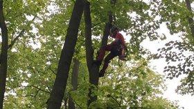 Odborníci ve Stromovce odstraňují suché větve stromů: Pozor, kudy chodíte