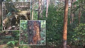 Tropy skončily, v Praze si dál vybírají svou daň: Seschlé stromy hrozí pádem na několika místech