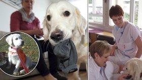 """První """"psí lékařka"""" půjde do důchodu: Fanynka pomohla na Bulovce stovkám lidí a těší i personál"""
