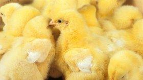 Tisíce kuřat uhořely při požáru. Vzplála drůbežárna v Otíně na Klatovsku