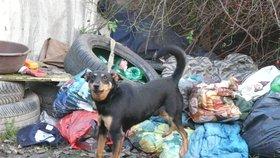 Fenka Kiki žila na smetišti, teď patří k týmu zvířecích záchranářů