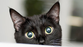 Těsné kočičí pic galerie