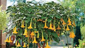 Jedovatá krása zahrady: Které rostliny jsou nebezpečné pro děti?