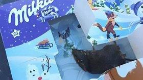 Hororový adventní kalendář: Holčička (2) v něm místo čokolády našla krysu