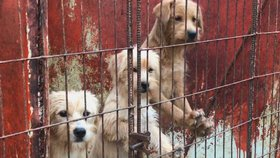 Známý útulek pozabíjel přes 230 psů. Lidem tvrdil, že našli nové domovy