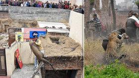 Vesnici vyděsil rozzuřený leopard. Lidé se schovávali na střechách b81b0c4168