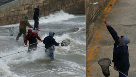 Na Maltě pršely stovky ryb z nebe. Lidé oběd zdarma sbírali na ulici i ve vlnách