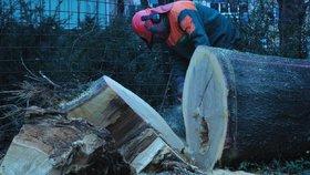 Pád stromu na Novojičínsku: Zabil muže